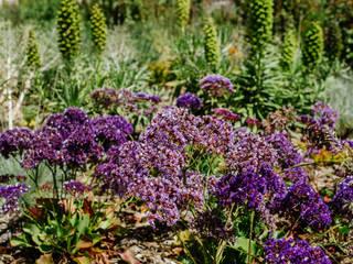 Simbiosi Estudi JardinesPlantas y flores