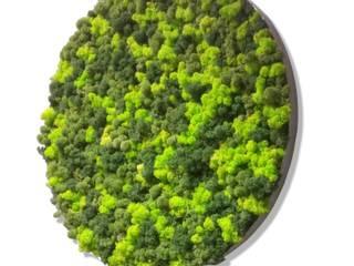 10 Yıl Boyunca Canlı Yosun Tablolar Akdeniz Klinikler Dikey Bahçe & Yosun Duvar - Art Wall Moss Akdeniz