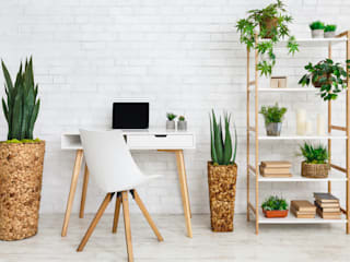 Interioforest Plantscaping Solutions Tropical style study/office