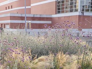 Trait d'union dry garden Spazi commerciali in stile mediterraneo di exTerra | consulenze ambientali e design nel verde Mediterraneo