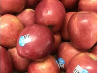 Oleh HC Fruits
