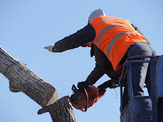 Pic by Tree Service Stamford