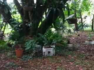 MANTENIMIENTO DE JARDINES de Edgar Agustin Vargas Tropical