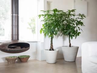 Maceteros decorativos, originales y modernos para decoración de espacios interiores. de Mobiliario led&design Moderno