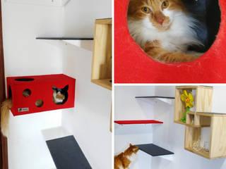 Adecuacion de espacios para gatos (gatificacion) de ModuCat Estructuras modulares para gatos Moderno