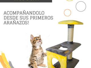 Gimnasio para gatos, referencia Obi de ModuCat Estructuras modulares para gatos Moderno