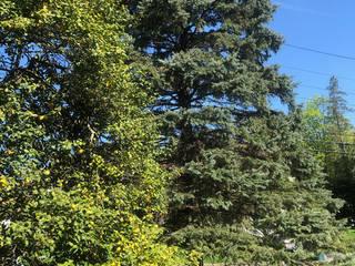 Tree Service Champaign Il Pros