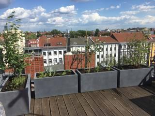 Балкон и терраса в стиле модерн от Pflanz im Glück Модерн