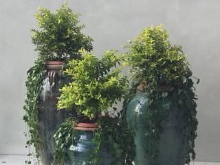 Plantas en macetas Balcones y terrazas escandinavas de Arquitectura Viva - Alexandra Patow Escandinavo