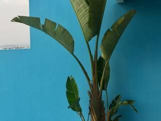 Plantas en macetas Balcones y terrazas tropicales de Arquitectura Viva - Alexandra Patow Tropical