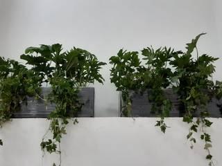 Macetas en centro comercial de Grupo Flores Moderno