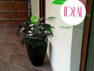 Diseño de interiores IDEAL Jardinería Salones minimalistas