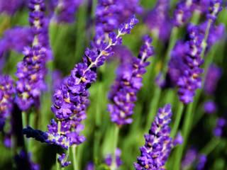 Moderne tuin met bloembak als blikvanger Moderne tuinen van Dutch Quality Gardens, Mocking Hoveniers Modern