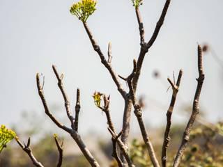 Aridez de Roberto Doger Fotografía Ecléctico