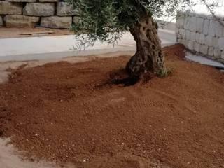 Obra Vista Alegre de Paisajismo y Mantenimiento Hibiscus Mediterráneo