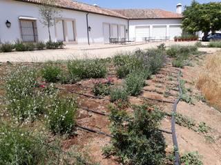 Actuación paisajística en Finca privada Jardines de estilo rústico de Jardinería Las Jaras Rústico