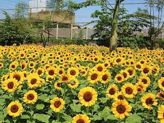 SUNFEST Sunflower Festival at Paris an Java Bandung Beta Landscape Indonesia Pusat Perbelanjaan Modern Aluminium/Seng Yellow