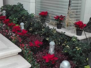 Jardineria bonaterra JardimPlantas e flores