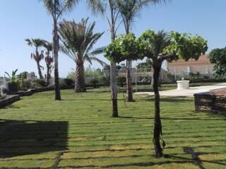 JARDINERIA POZO S.L. Front yard Green