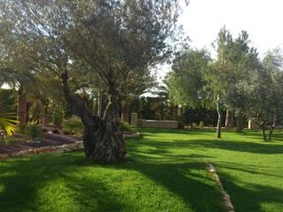 Ajadinamiento de parcela particular en Elche JARDINERIA POZO S.L. Jardines con piedras Verde