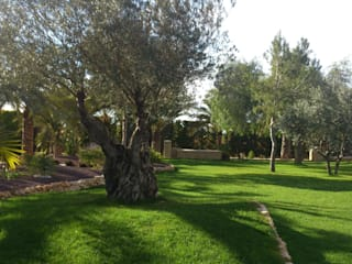 JARDINERIA POZO S.L. Rock Garden Green