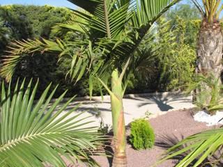 Plantación de palmáceas en rocalla. JARDINERIA POZO S.L. Jardines con piedras