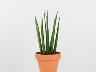 Bioma Plants Interior landscaping