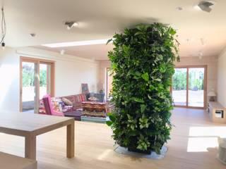 Urban Jungle - Plantas e Projectos Paisajismo de interiores