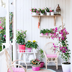 Pflanzenfreude.de 庭植木&花