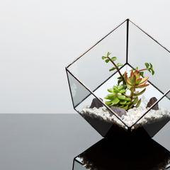 Terrarium Installations The Urban Botanist リビングルームアクセサリー&デコレーション