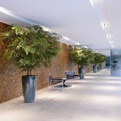 Svetlana Plantas Preservadas Paisajismo de interiores