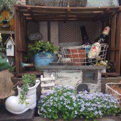 100均アイテムの家庭菜園・ガーデニング写真 kokkomacha 庭植木鉢&花瓶
