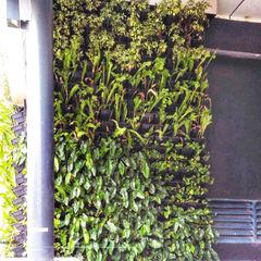 PT. Kampung Flora Cipta Tropical style office buildings Green