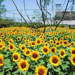 Beta Landscape Indonesia Shopping Centres Aluminium/Zinc Yellow