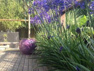 Modern Mediterranean garden Paul Newman Landscapes Tropical style garden