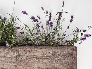 Blumenkasten edictum - UNIKAT MOBILIAR HaushaltAccessoires und Dekoration