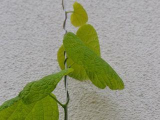 Bepflanzung sonnige Süd- Dachterrasse Berlin Nelka Balkon, Veranda & Terrasse
