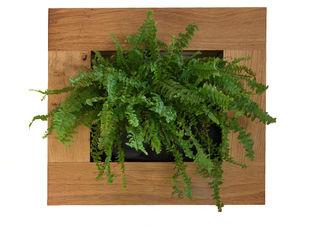 Small Oak - Vertical Garden Living Interiors UK SztukaWyroby artystyczne