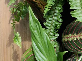 Vertical Garden - Antique Pine Living Interiors UK SztukaWyroby artystyczne