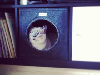 Plug-in Katzenhöhle aus Filz Stich-haltig HaushaltHaustierzubehör