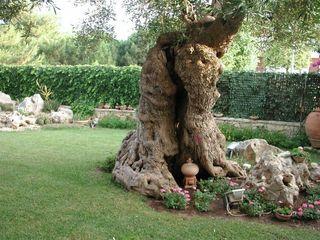 MELLOGIARDINI EXTERIOR DESIGNERS Сад