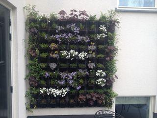 Stam Hoveniers Garden Plants & flowers