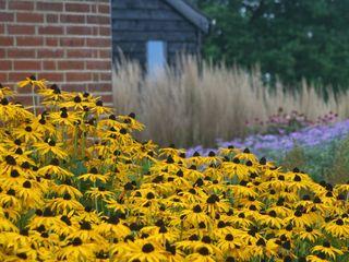 Garden with a view Rae Wilkinson Design Ltd Сад