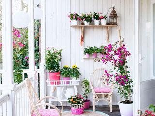 Pflanzenfreude.de Сад Растения