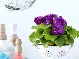Pflanzenfreude.de Study/officeAccessories & decoration