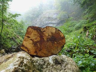 Holzgeschichten