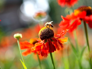 Nature rich garden good for bees and other insects/ Natuurrijke landschapstuin met bloemrijke beplanting goed voor bijen ea. insecten. FLORERA , design and realisation gardens and other outdoor spaces. Jardines de estilo rural