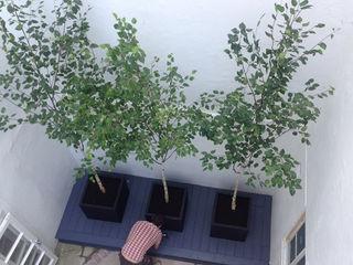 Minimal courtyard Claire Potter Design Minimalist style garden