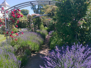 Romantic rose garden Roger Webster Garden Design Klasik Bahçe