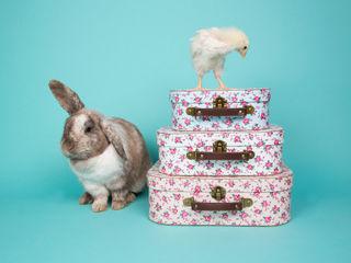 Petite Rose Storage Suitcases- set of 3 Sass & Belle QuartoAcessórios e decoração